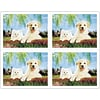 Dog & Cat Generic Laser Postcards