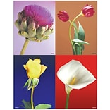 Scenic Assorted Laser Postcards; Photo Flowers