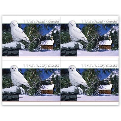 Generic Laser Postcards; Owl in Tree