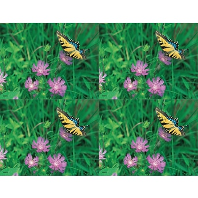 Scenic Laser Postcards, Butterfly/Flower