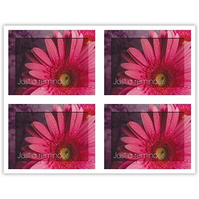 Generic Laser Postcards; Pink Daisy