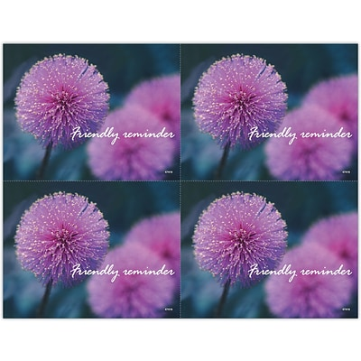 Generic Laser Postcards; Thistle Flower