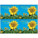 Sunflower Field Generic Laser Postcards