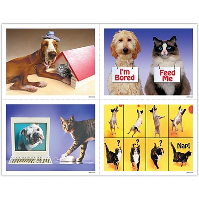 Veterinary Assorted Laser Postcards; Funny Pets