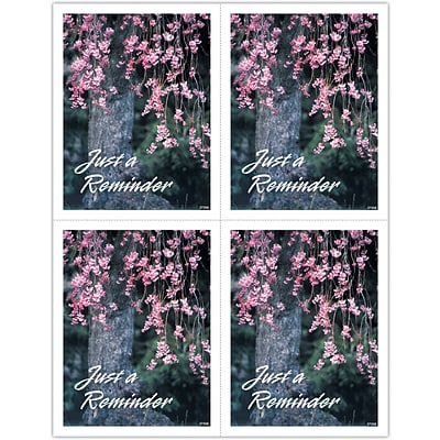 Generic Laser Postcards; Flowering Tree Reminder
