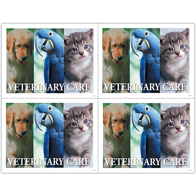 Photo Image Laser Postcards; Veterinary Care