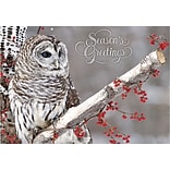 Winter Owl Cards w/Self-Seal Envelopes