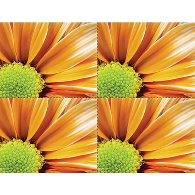 Medical Arts Press® Photo Image Laser Postcards; Orange Flower