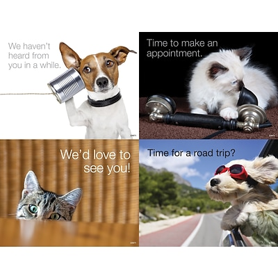 Medical Arts Press® Photo Image Assorted Laser Postcards; Dogs and Cats
