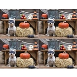 Laser Postcard; Dog in Mask/Pumpkin