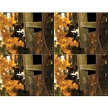 Laser Postcard; Cat in Fall Cart