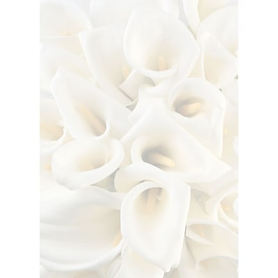 Great Papers® White Calla Lilies Bulletin, 50/Pack