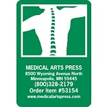 Medical Arts Press® Color Choice Magnets; Spine in Human Back