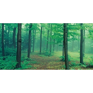 Biggies- Wall Mural- Misty Forest 54 x 27