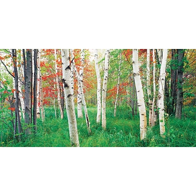 Biggies - Wall Mural-Aspen Grove 80 x 40