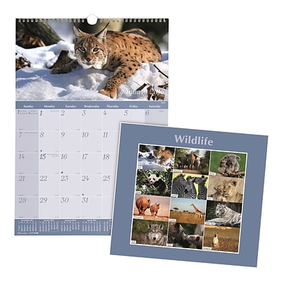 2018 Brownline® 12 x 17 Monthly Wall Calendar, Wildlife Theme (C173108)