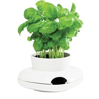 Herb Pot with $150 on ink and toner