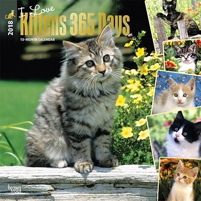 I Love Kittens 365 Days 2018 12 x 12 Inch Square Wall Calendar with Foil Stamped Cover
