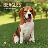 Beagles 2018 12 x 12 Inch Square Wall Calendar with Foil Stamped Cover