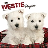 West Highland White Terrier Puppies 2018 12 x 12 Inch Square Wall Calendar