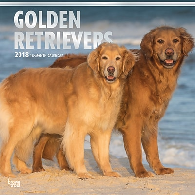 Golden Retrievers 2018 12 x 12 Inch Square Wall Calendar with Foil Stamped Cover