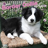 Border Collie Puppies 2018 12 x 12 Inch Square Wall Calendar
