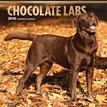 Chocolate Labrador Retrievers 2018 12 x 12 Inch Square Wall Calendar with Foil Stamped Cover