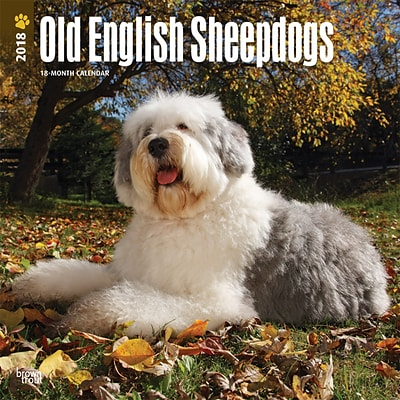 Old English Sheepdogs 2018 12 x 12 Inch Square Wall Calendar