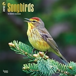Songbirds 2018 12 x 12 Inch Square Wall Calendar with Foil Stamped Cover