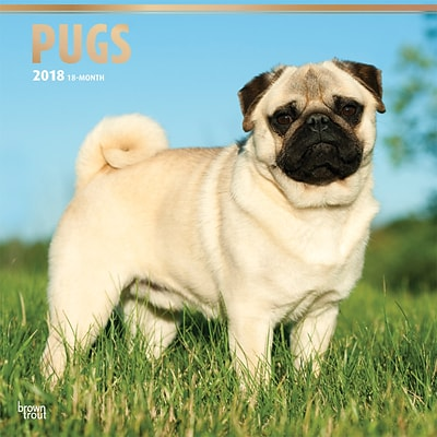 Pugs 2018 12 x 12 Inch Square Wall Calendar with Foil Stamped Cover
