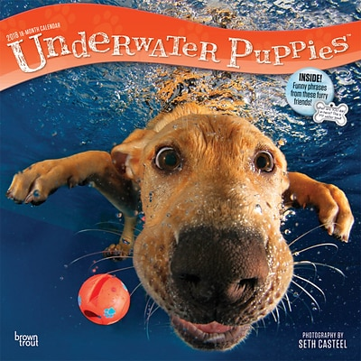 Underwater Puppies 2018 12 x 12 Inch Monthly Square Wall Calendar