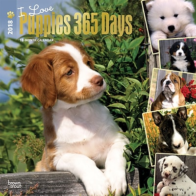 I Love Puppies 365 Days 2018 12 x 12 Inch Square Wall Calendar with Foil Stamped Cover