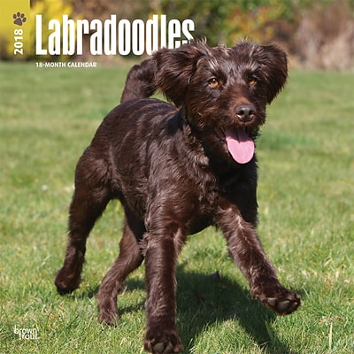Labradoodles 2018 12 x 12 Inch Square Wall Calendar