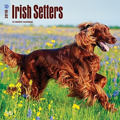 Irish Setters 2018 12 x 12 Inch Square Wall Calendar