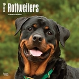 Rottweilers 2018 12 x 12 Inch Square Wall Calendar