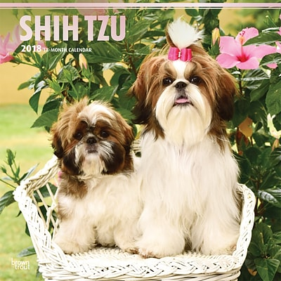 Shih Tzu 2018 12 x 12 Inch Square Wall Calendar with Foil Stamped Cover