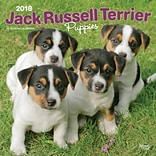 Jack Russell Terrier Puppies 2018 12 x 12 Inch Square Wall Calendar