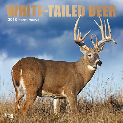 White Tailed Deer 2018 12 x 12 Inch Square Wall Calendar with Foil Stamped Cover