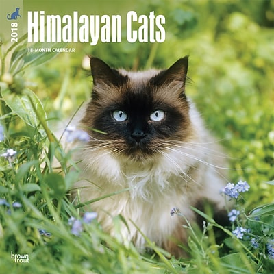 Himalayan Cats 2018 12 x 12 Inch Square Wall Calendar