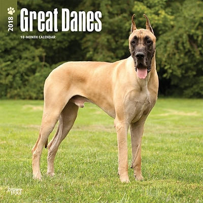 Great Danes 2018 12 x 12 Inch Square Wall Calendar