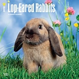 Lop Eared Rabbits 2018 12 x 12 Inch Square Wall Calendar