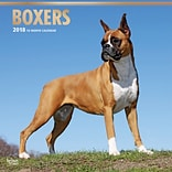 Boxers 2018 12 x 12 Inch Square Wall Calendar with Foil Stamped Cover