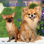 Chihuahuas 2018 12 x 12 Inch Square Wall Calendar with Foil Stamped Cover