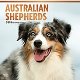 Australian Shepherds 2018 12 x 12 Inch Square Wall Calendar with Foil Stamped Cover