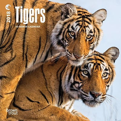 Tigers 2018 Mini 7 x 7 Inch Wall Calendar