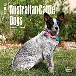 Australian Cattle Dogs 2018 Mini 7 x 7 Inch Wall Calendar