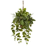 Nearly Natural Mixed Pothos and Boston Fern in Hanging Basket (6986)