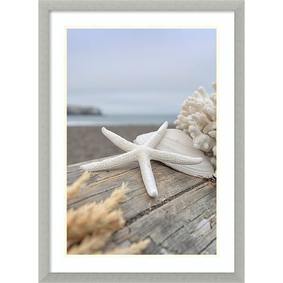 Amanti Art Framed Art Print Rodeo Beach Shells 13 by Alan Blaustein 21 x 29H, Frame Silver (DSW3894384)