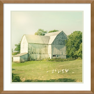 Amanti Art Framed Art Print Farm Morning III Square (Barn) by Sue Schlabach 21W x 21H Frame Natural Maple (DSW3894394)