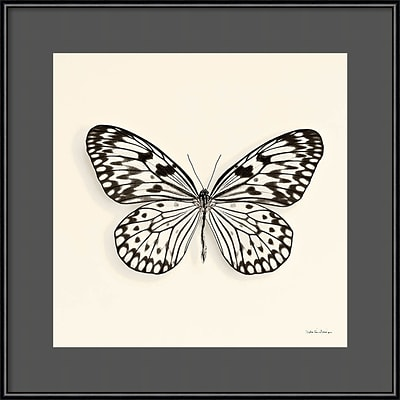 Amanti Art Framed Art Print Butterfly V BW Crop by Debra Van Swearingen 16 x 16 Frame Black (DSW3894406)